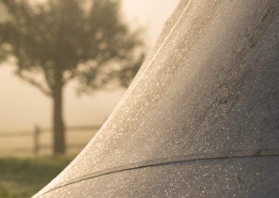 linden-tree-tepee-morning-dew