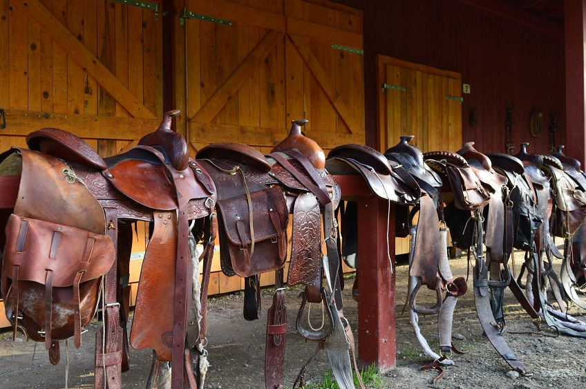 Saddle up! – tips and trick for Horse Safety