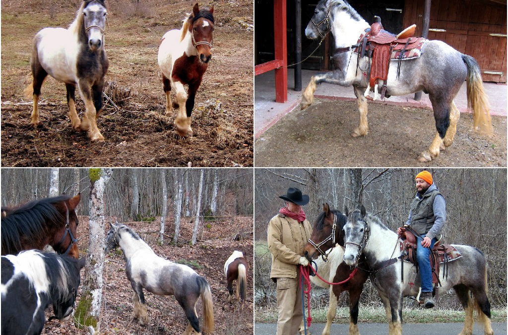 Newcomers at Linden Tree Retreat & Ranch: Lucky Luke and Sahib